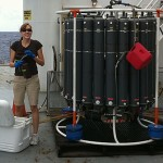 Essential Vitamins in the Marine Environment