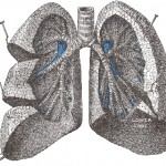 New Drug Target Found for Pulmonary Fibrosis