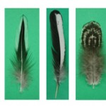 The cellular and molecular composition of feathers can be experimentally manipulated to test the hypothesis that certain molecular components may enhance or suppress pigment differentiation.