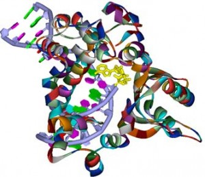 DNA polymerase beta