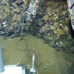 Remotely operated undewater sub Jason-II uses a sensor to measure temperature while exploring an underwater outcrop of rocks, much as it will during this month's expedition. (Photo/courtesy of Woods Hole Oceanographic Institution)