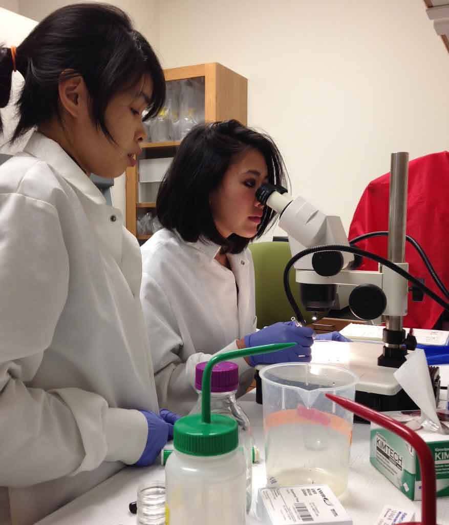 Scientist Camilla Teng, left, and painter Kristen Chen work in the lab of a USC stem cell researcher. (USC Photo/Jennifer Crump)