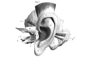 ear imagery