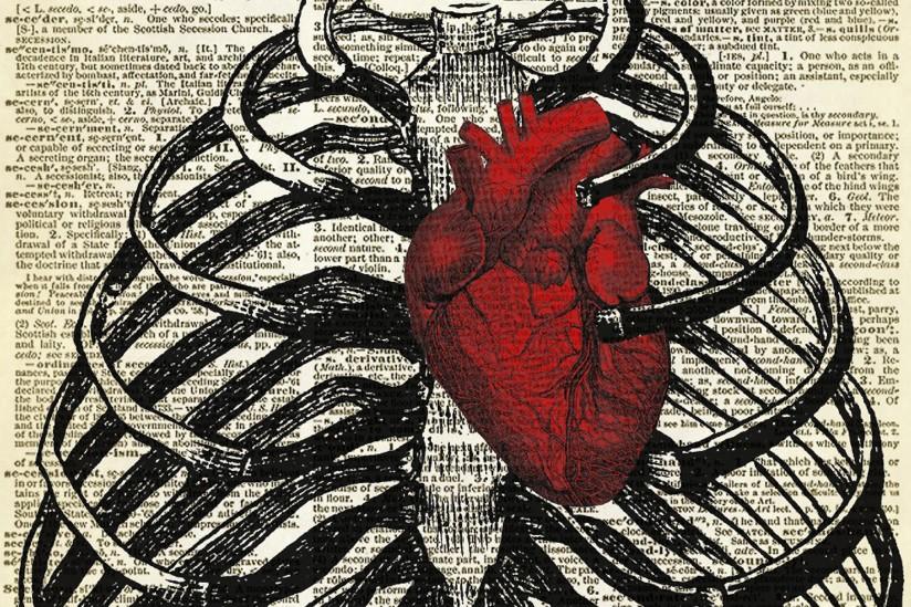 Medical Illustration of a Heart