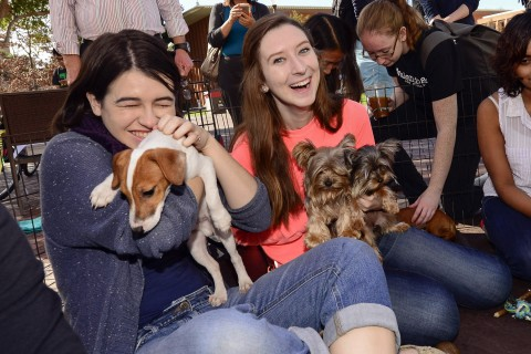 Students play with puppies