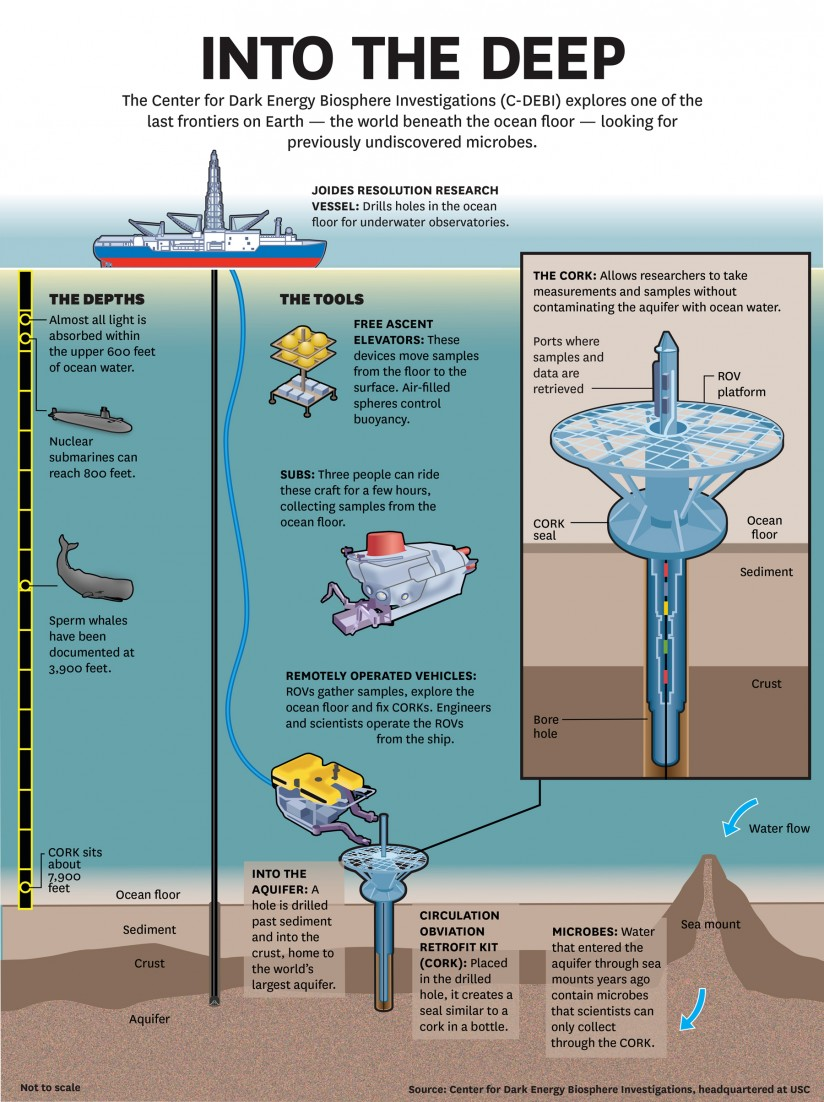 New Species Discovered Beneath Ocean Crust - Graphic