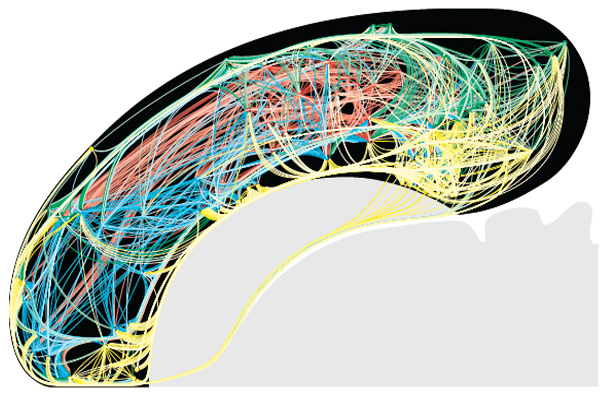A color-coded flat map of 1,923 rat cortical association macroconnections (RCAMs).
