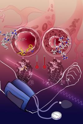 Illustration of the effects of angiotensin (Photo/courtesy of Katya Kadyshevskaya)