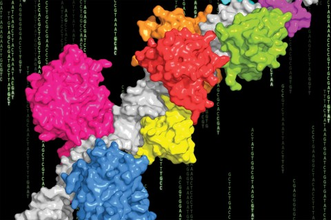 integrating genomics and structural biology to uncover some significant insights into how proteins recognize DNA.