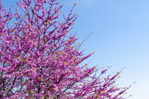 A Jacaranda tree, cervical cancer