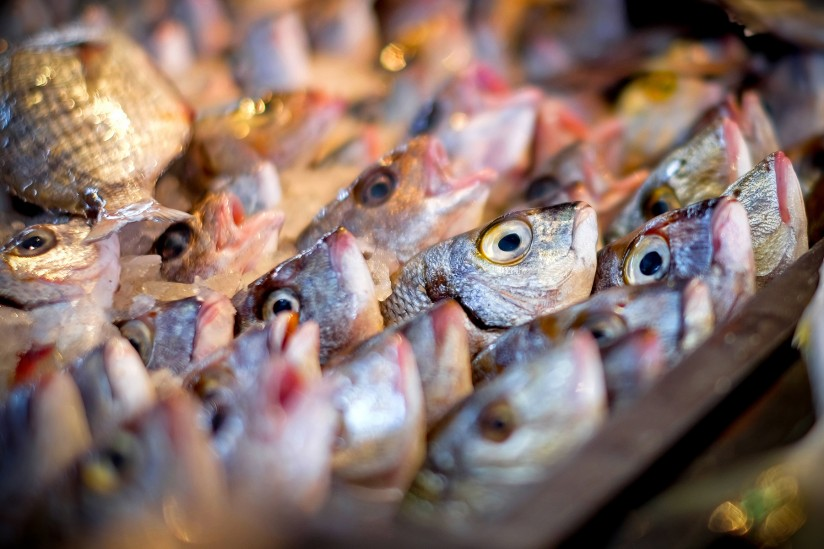 Something s literally fishy study finds fish smell makes for Fish smell disease
