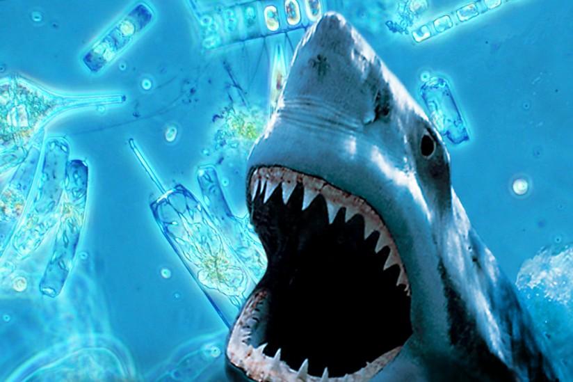 Shark and microorganisms