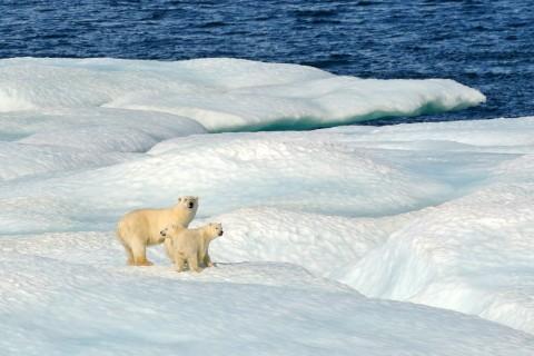 Climate change, Arctic,