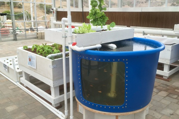 aquaponics system, sustainability
