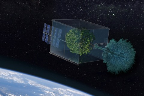 "Tree ""grows"" in space"
