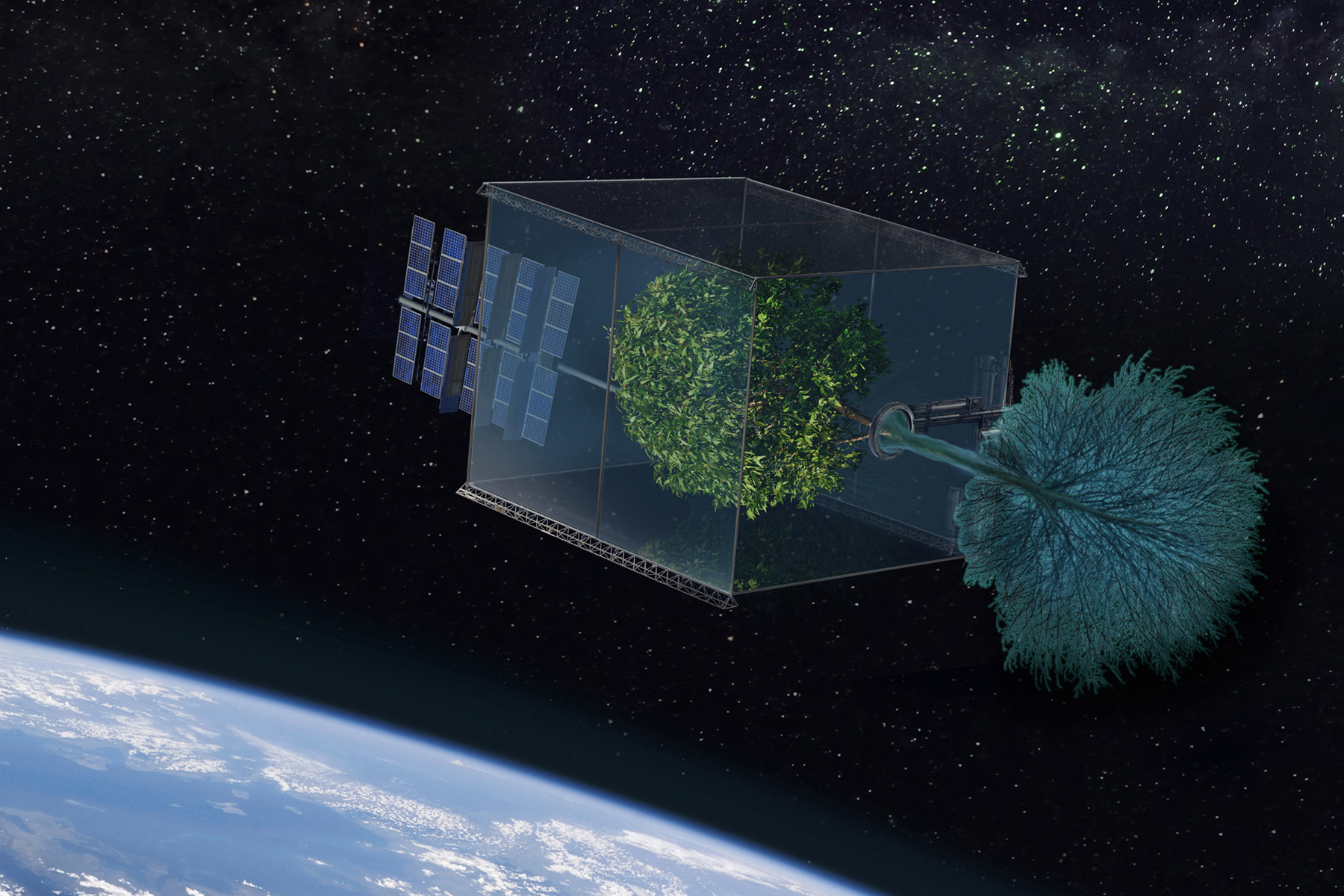 Can A Tree Grow In Space?