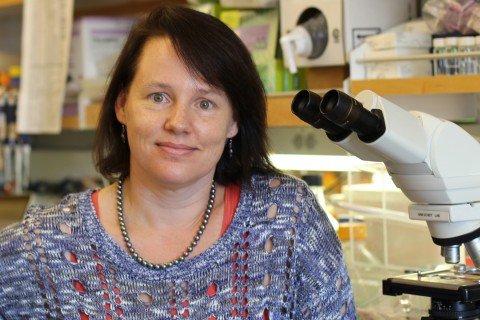 Stem cell researcher Tracy Grikscheit
