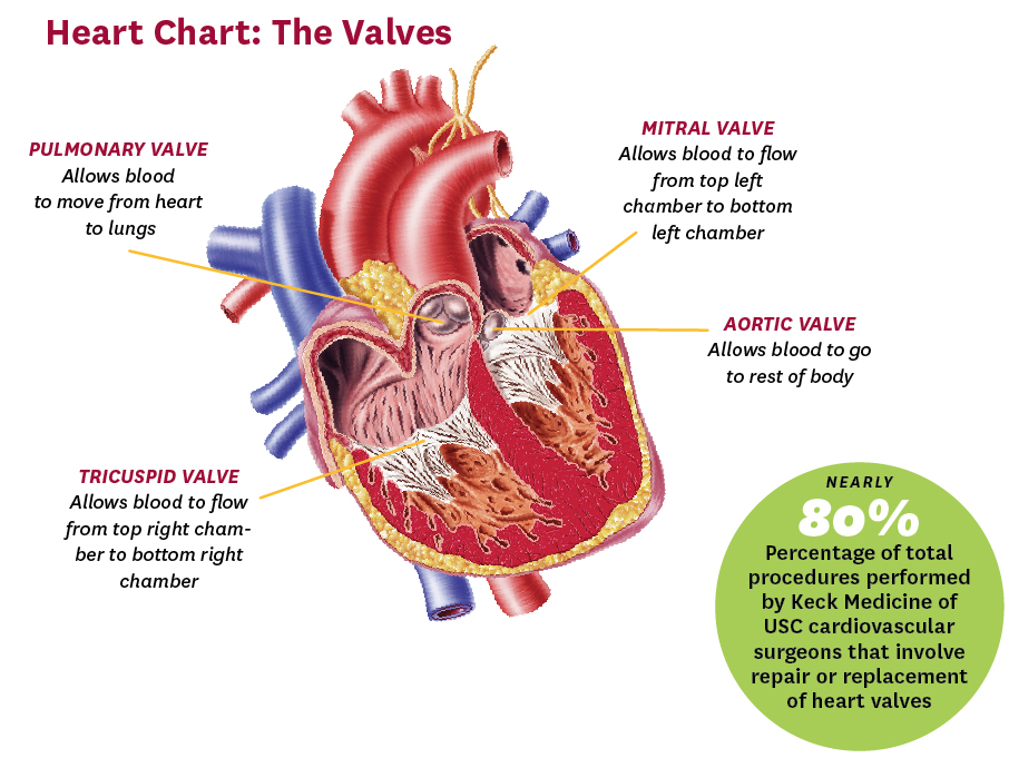 heartchart