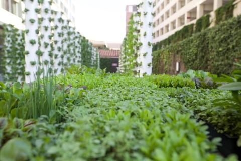 USC's Teaching Garden