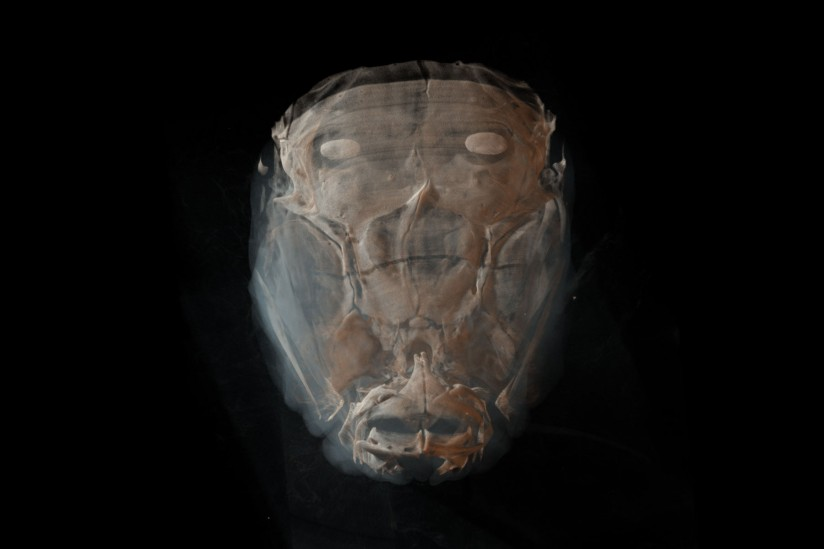Zebrafish face