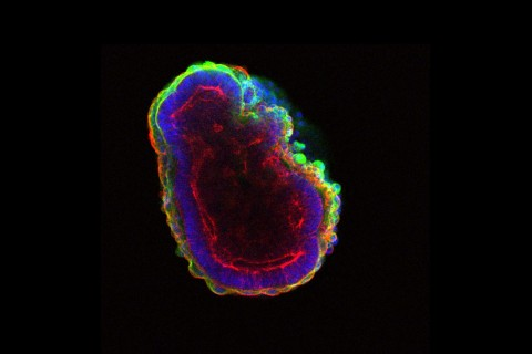 stem cell microscopic view