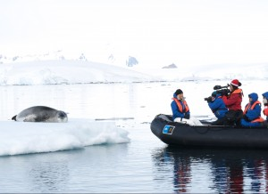 Seal in Antartica