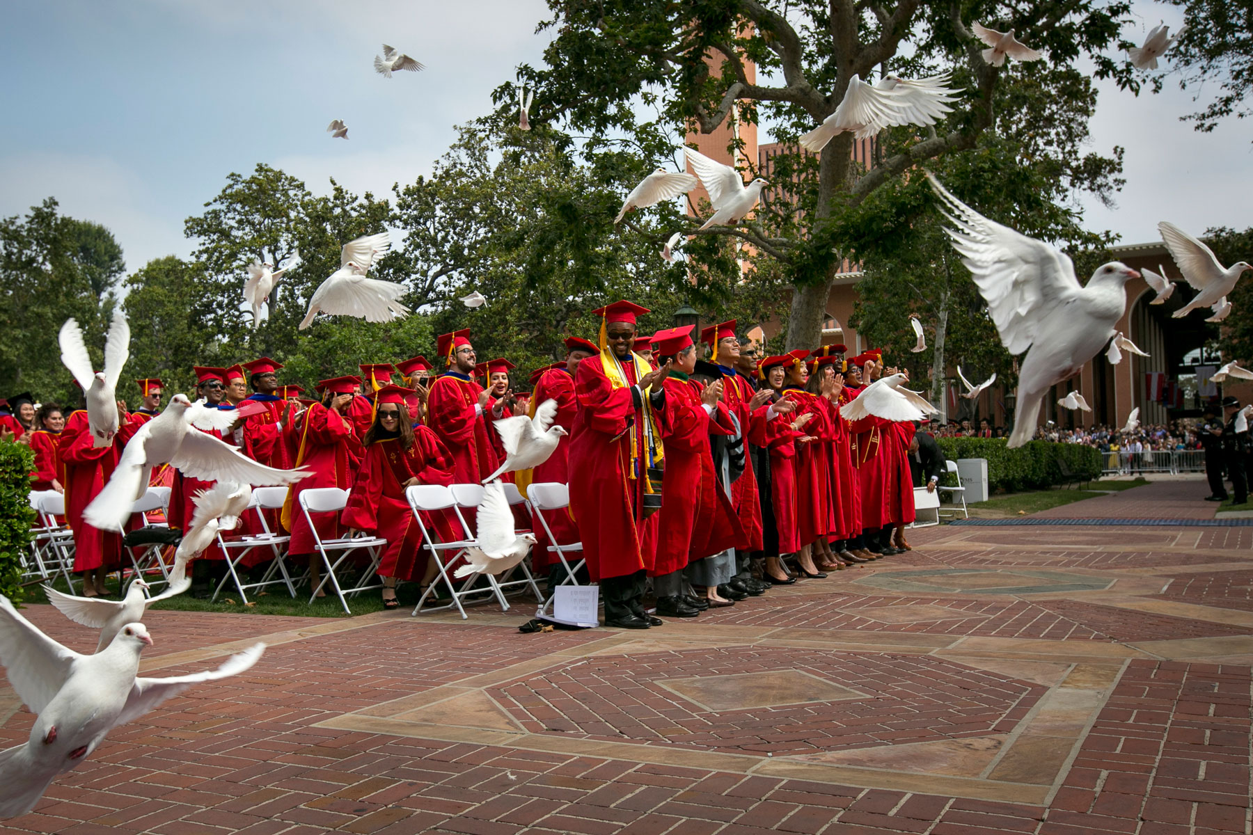 Doves at commencement
