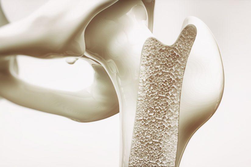 illustration of cross section of bone