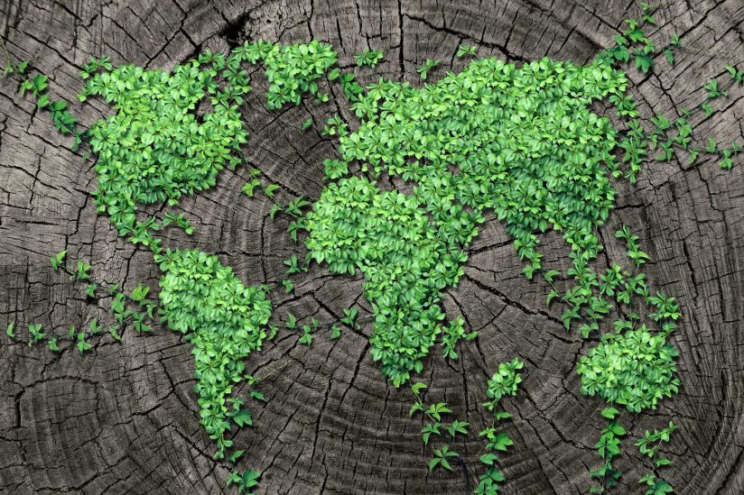 green plants growing on tree stump in the shape of a world map