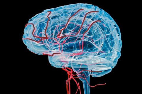 digital medical illustration of blood vessels in brain