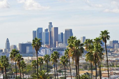 Los Angeles skyline with palm trees in front