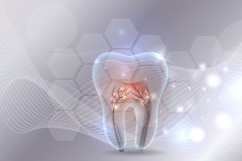 tooth illustration healthy vessels and tooth enamel