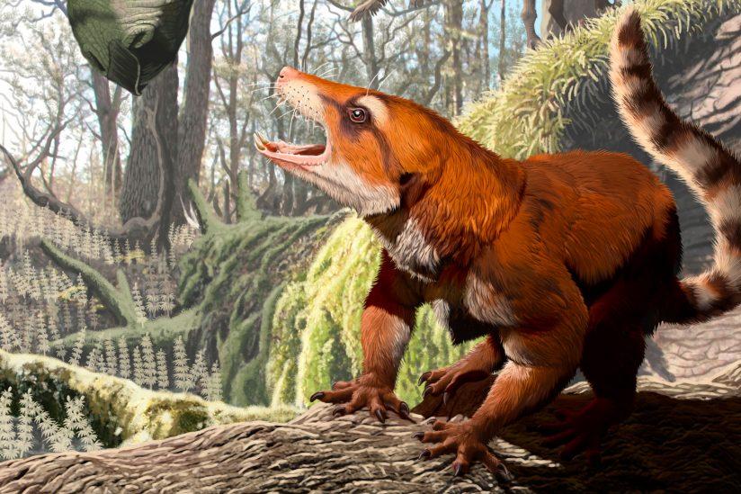 Cifelliodon wahkarmoosuch utah fossil discovery