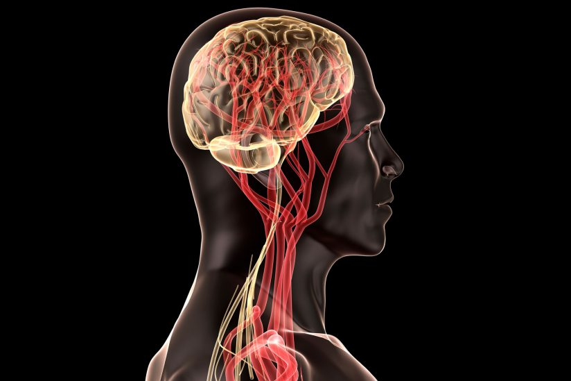 Brain mapping at USC: illustration of brain and nerves