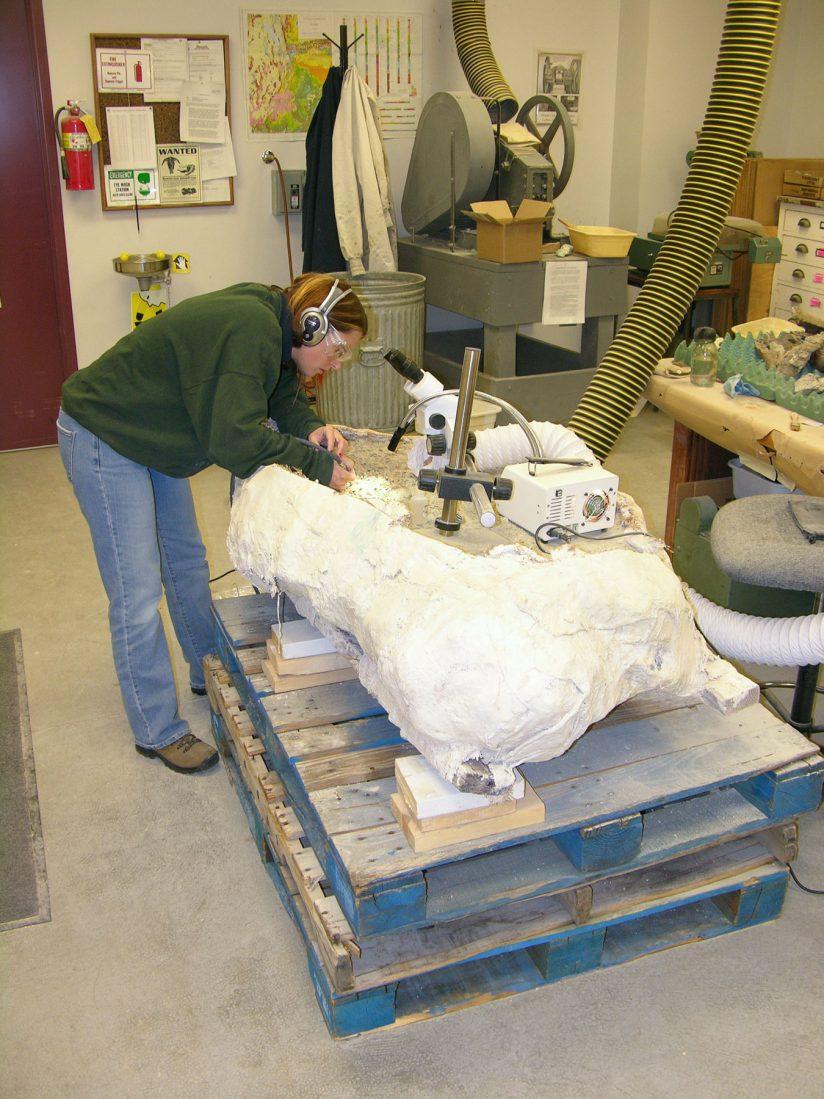 Cifelliodon skull discovery in lab