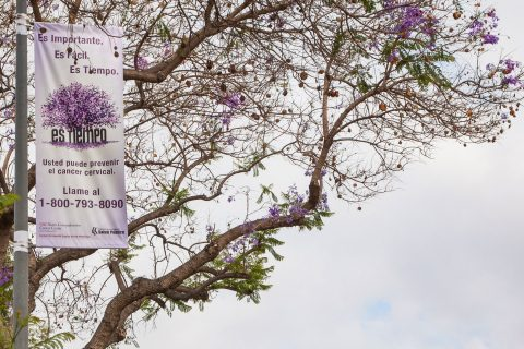 jacaranda trees with cervical cancer prevention banner