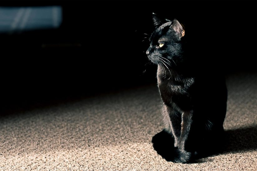 black cat and superstitions