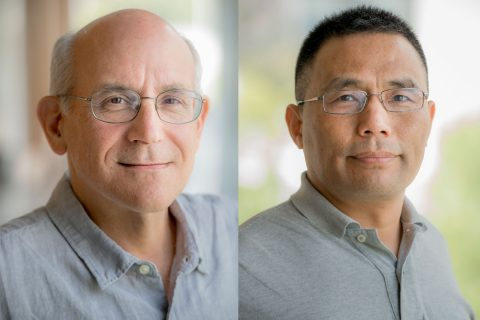 Stem cell research: Neil Segil and Qi-Long Ying research grants