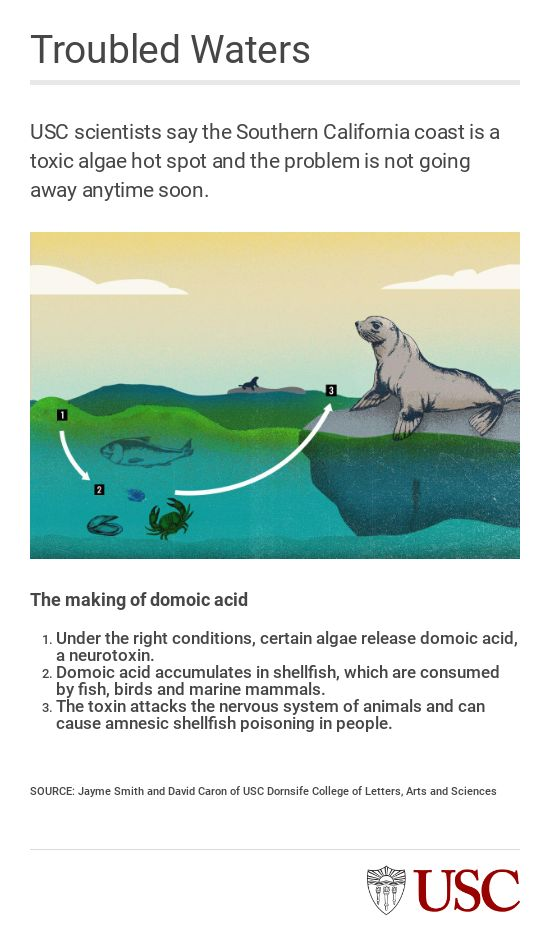 Domoic acid toxicity