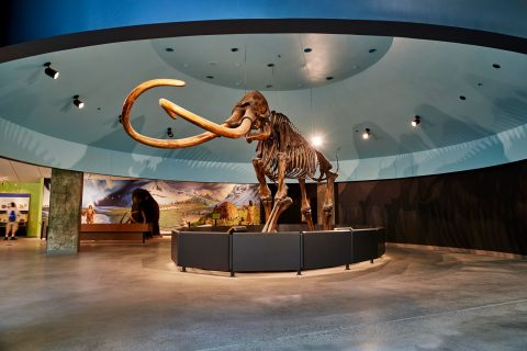 USC augmented reality La Brea Tar Pits Museum