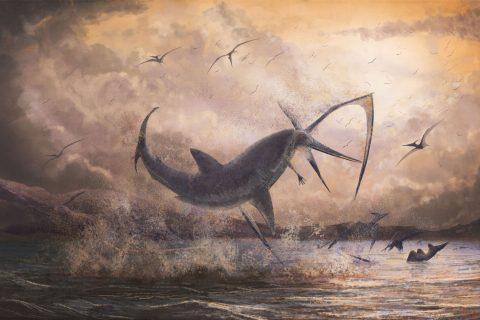 shark and flying dinosaur fossil