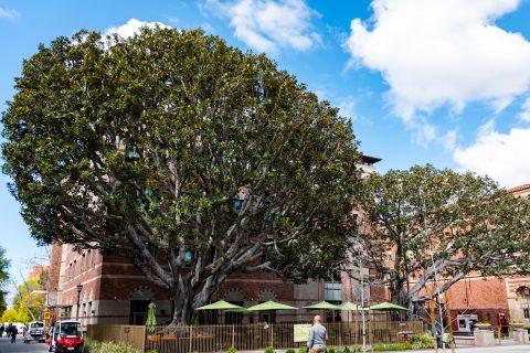 Arborist trees USC campus