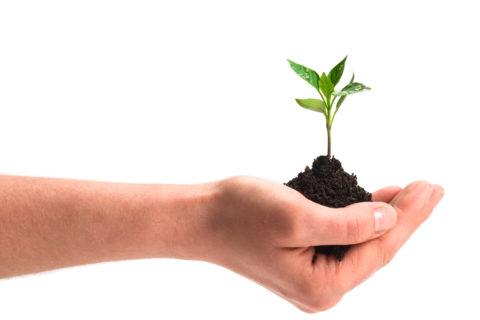 Hand holding a sapling