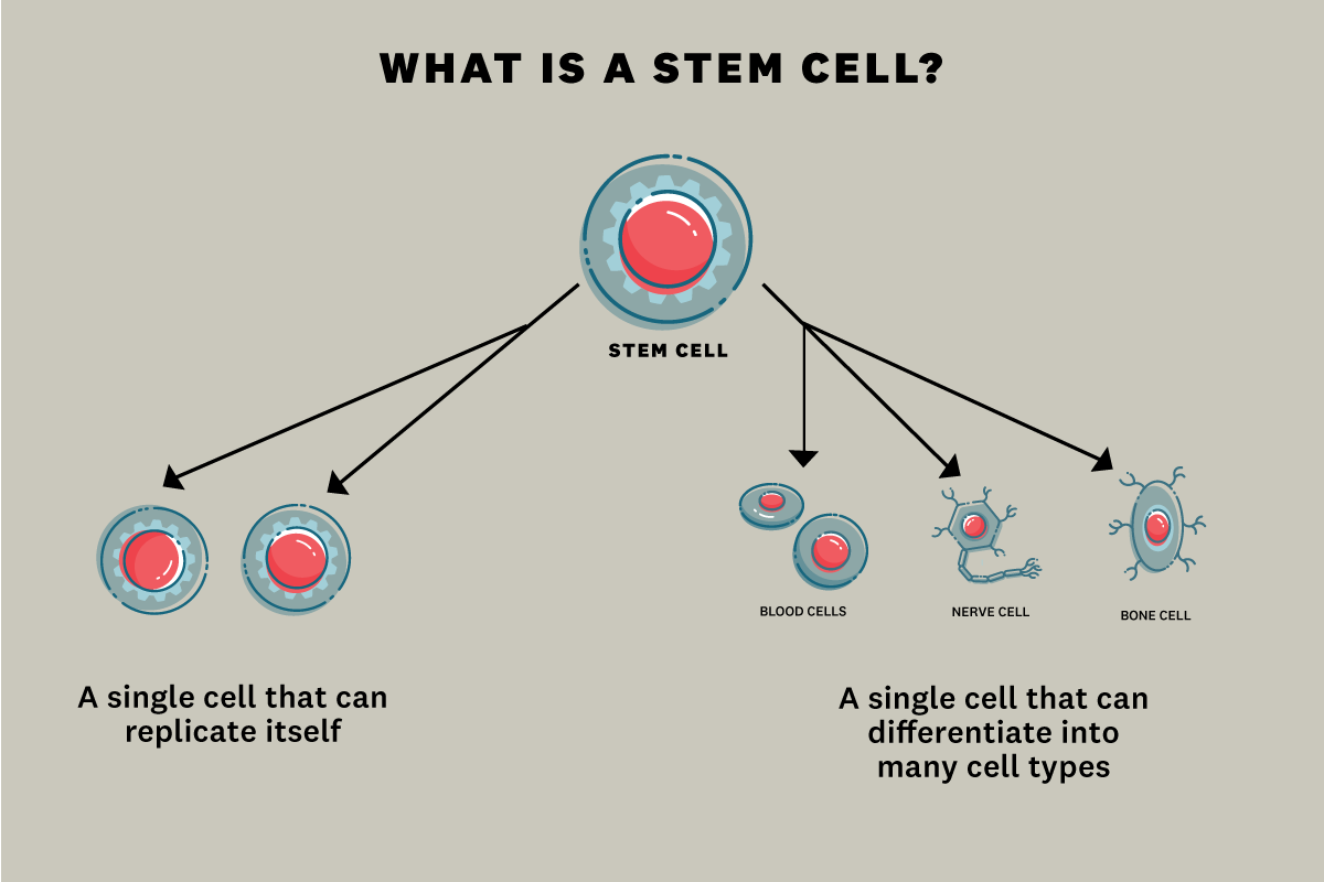 USC stem cell researchers are making life-changing discoveries