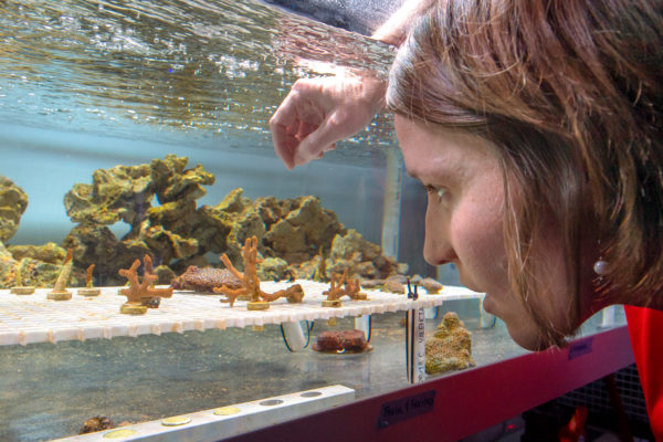 Carly Kenkel coral resesarch