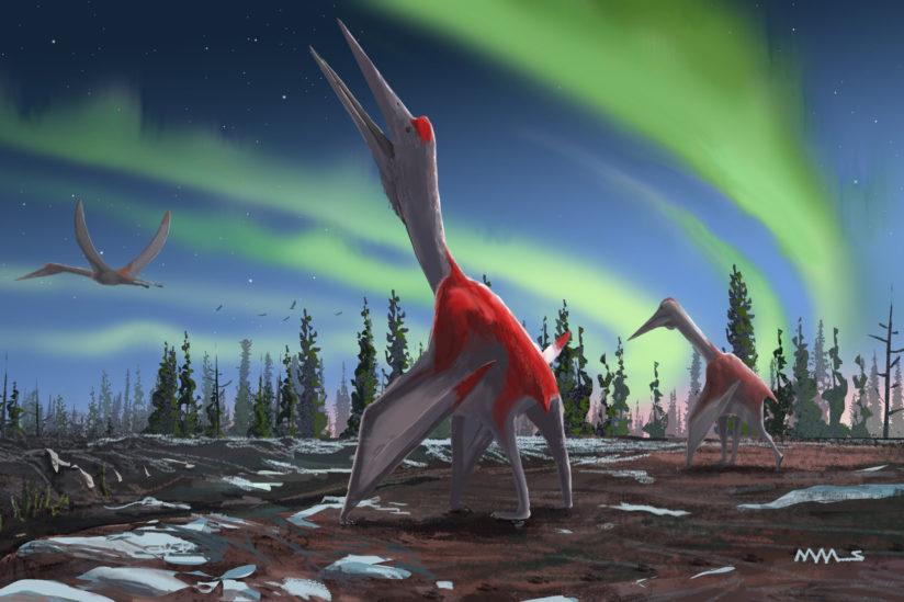 new pterosaur dinosaur discover