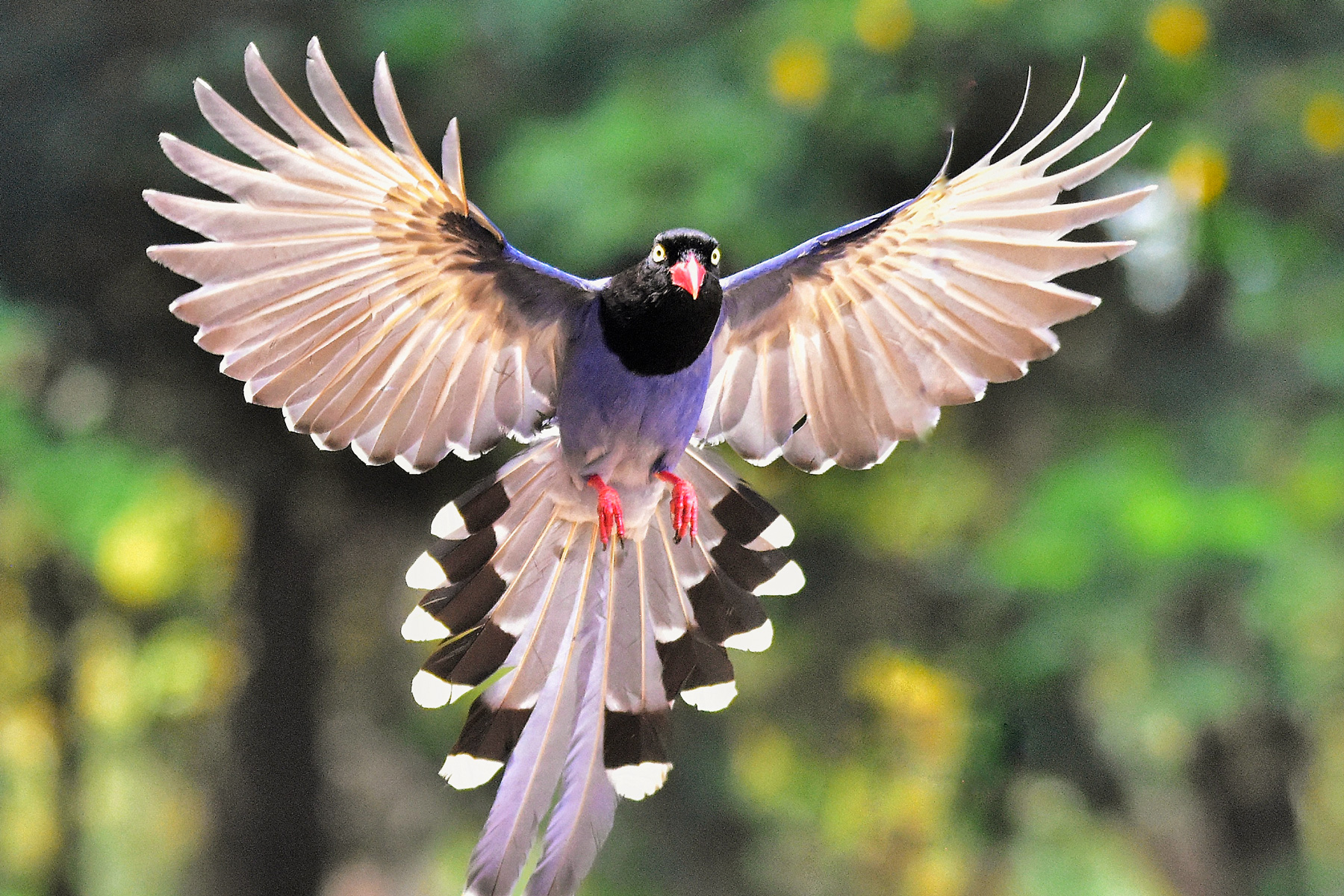 How birds fly: New USC study examines the evolution of flight feathers