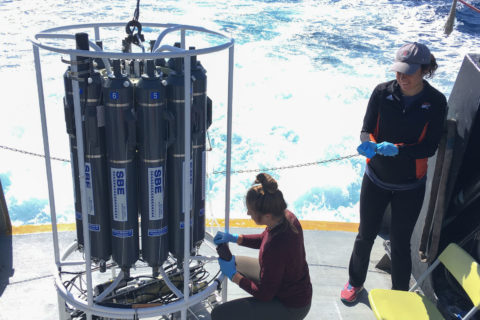 ocean microbe testing bacteria and viruses