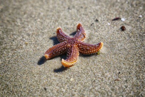 how do sea stars move