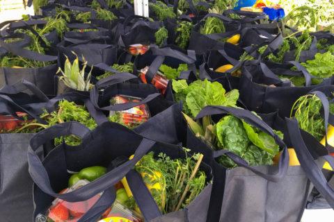 CultivaLA healthy food access community gardens